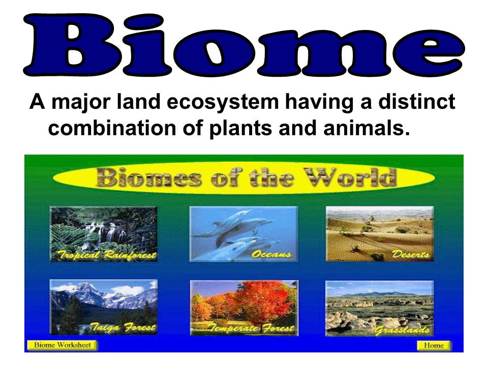 Biome A major land ecosystem having a distinct combination of plants and animals.