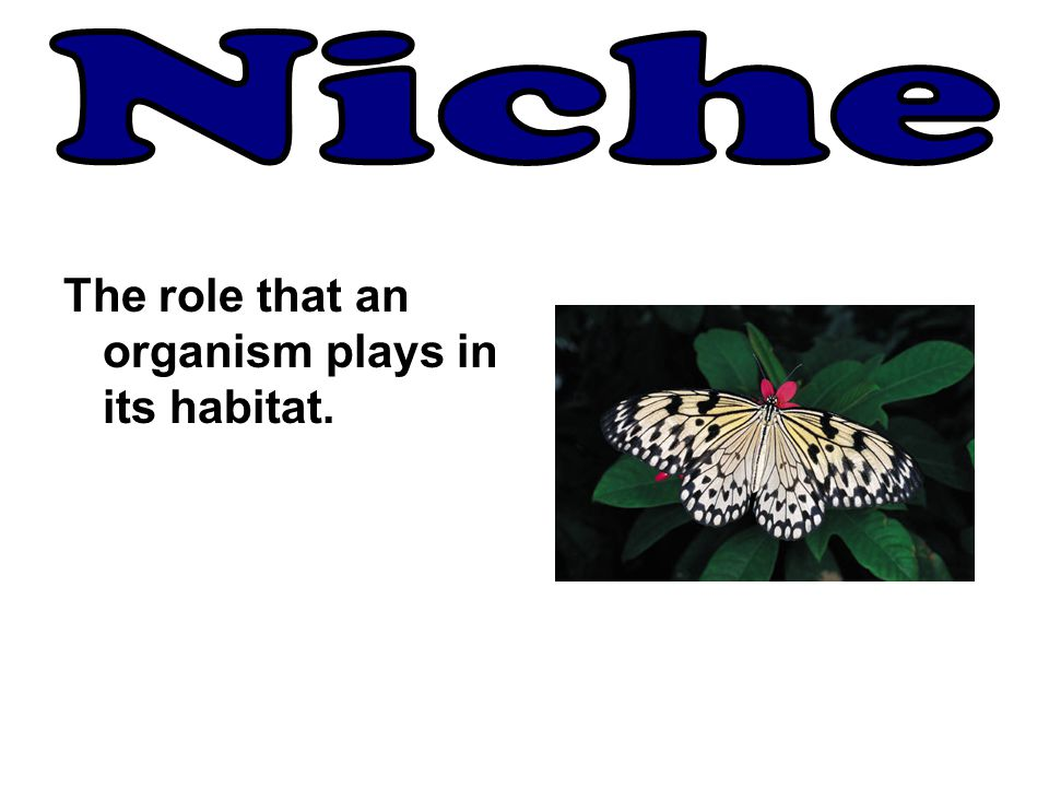 Niche The role that an organism plays in its habitat.