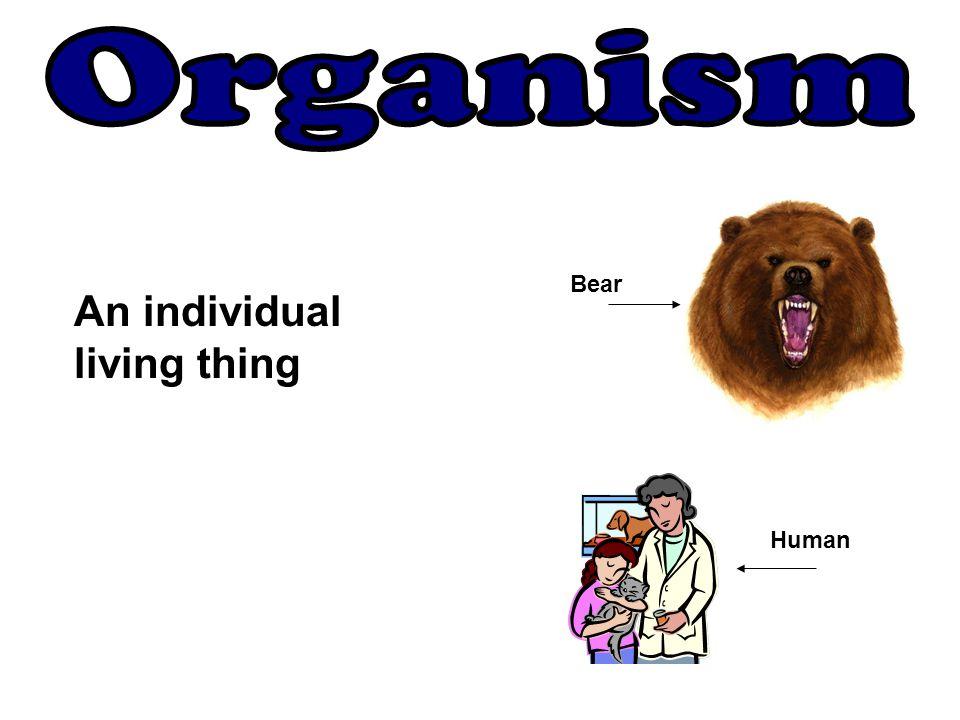 Organism Bear An individual living thing Human