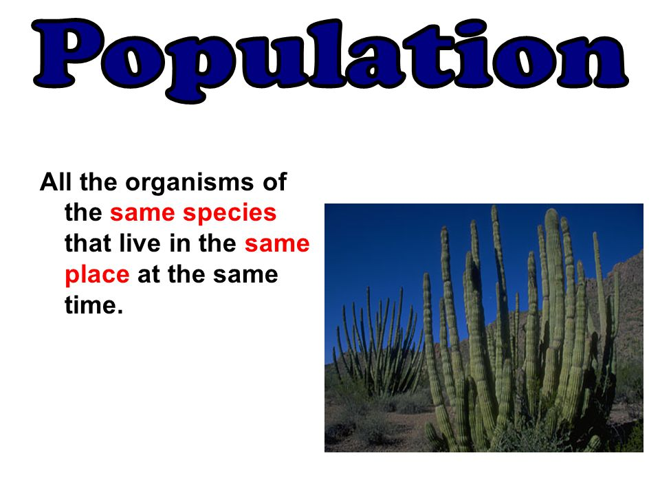 Population All the organisms of the same species that live in the same place at the same time.