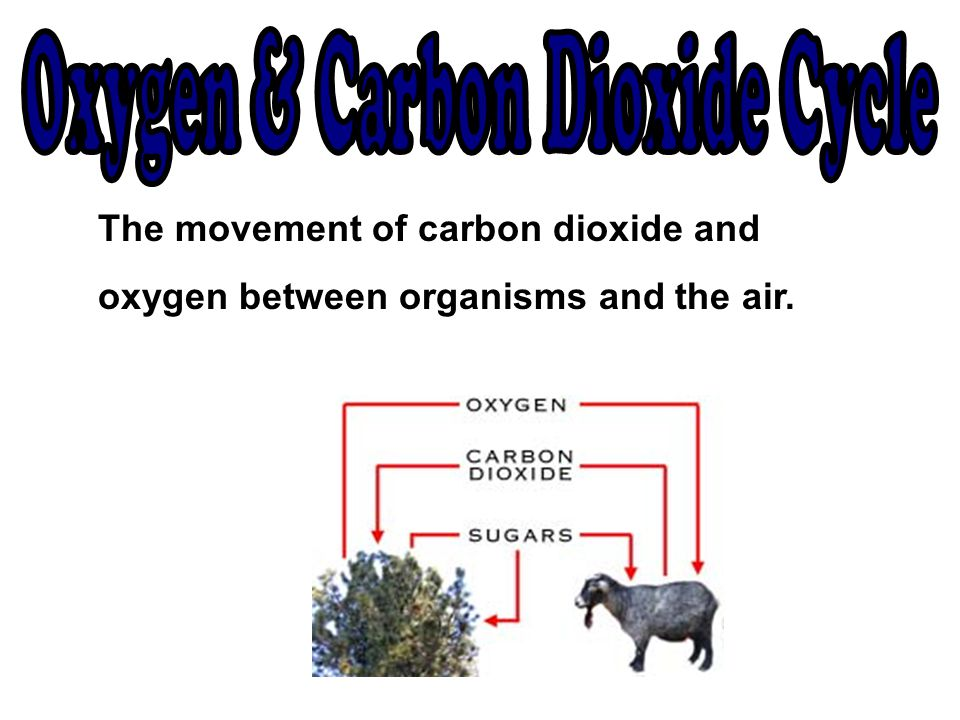 Oxygen & Carbon Dioxide Cycle