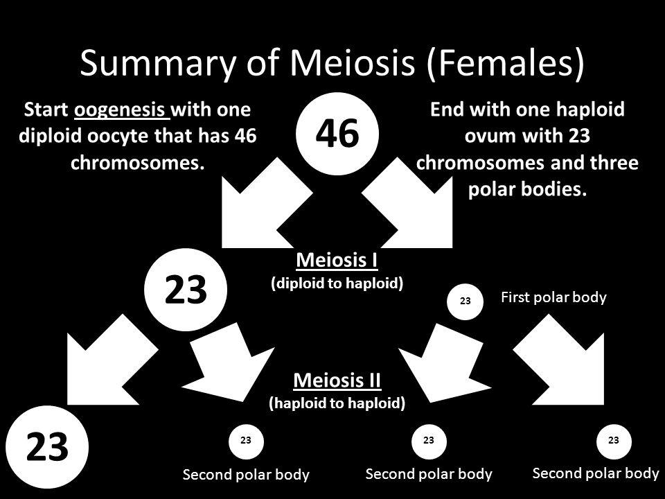 Summary of Meiosis (Females)