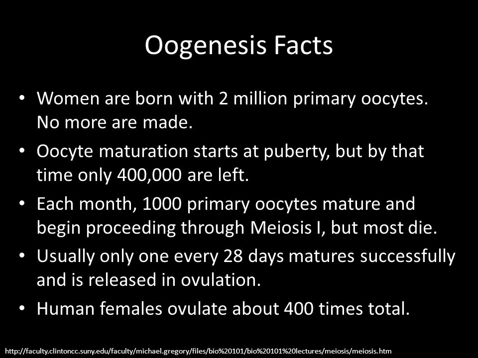 Oogenesis Facts Women are born with 2 million primary oocytes. No more are made.