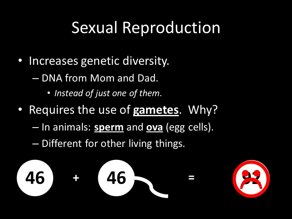 46 46 92 Sexual Reproduction Increases genetic diversity.