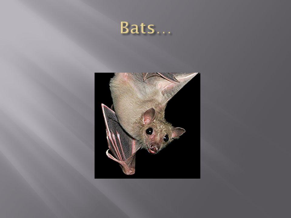 Bats…