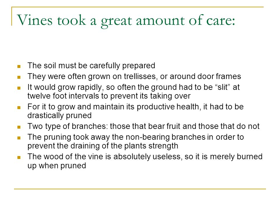 Vines took a great amount of care: