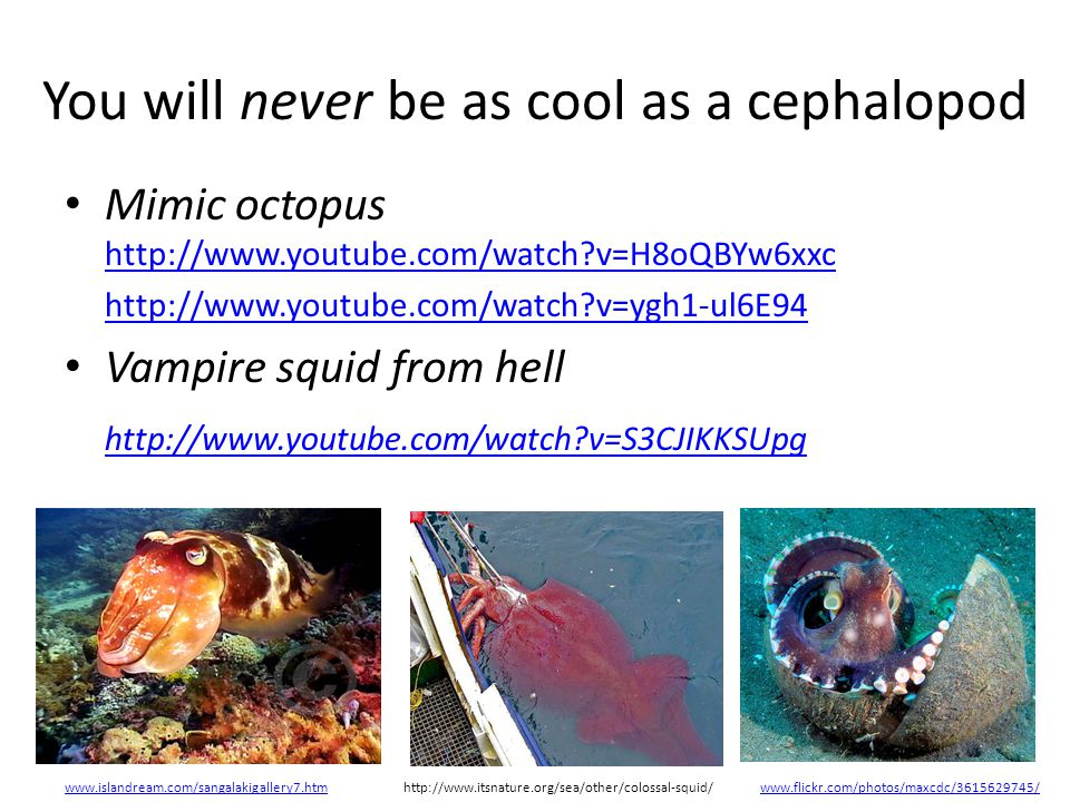 You will never be as cool as a cephalopod