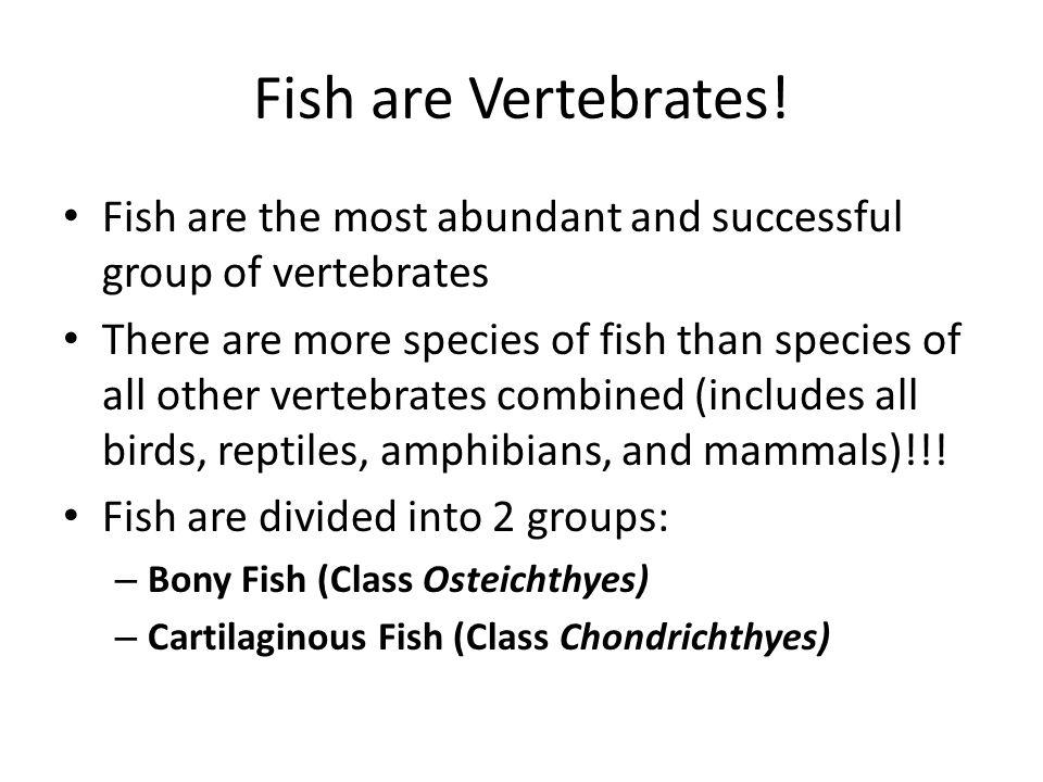 Fish are Vertebrates! Fish are the most abundant and successful group of vertebrates.