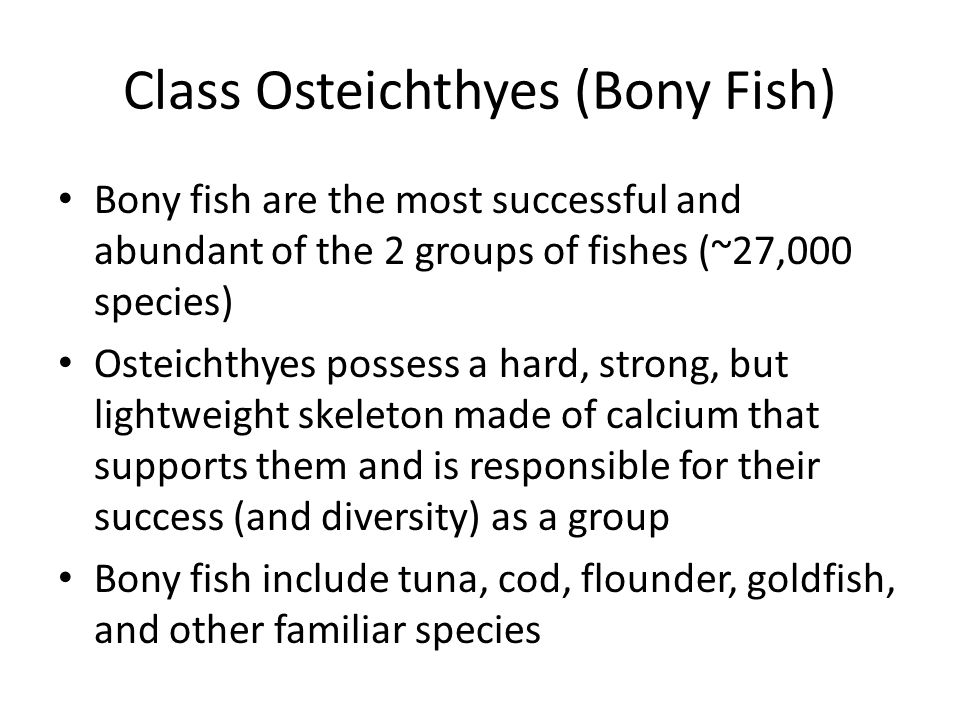 Class Osteichthyes (Bony Fish)