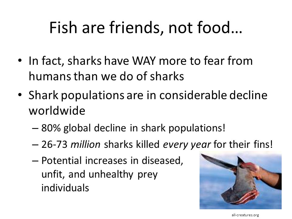Fish are friends, not food…