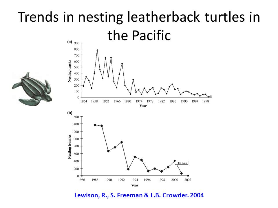 Trends in nesting leatherback turtles in the Pacific