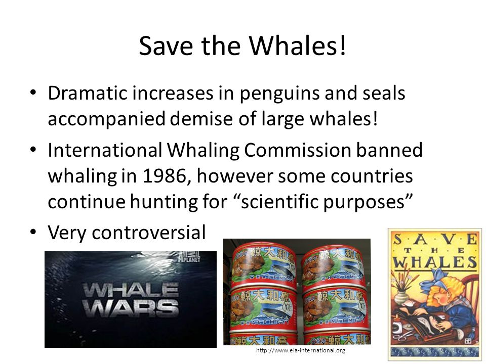 Save the Whales! Dramatic increases in penguins and seals accompanied demise of large whales!