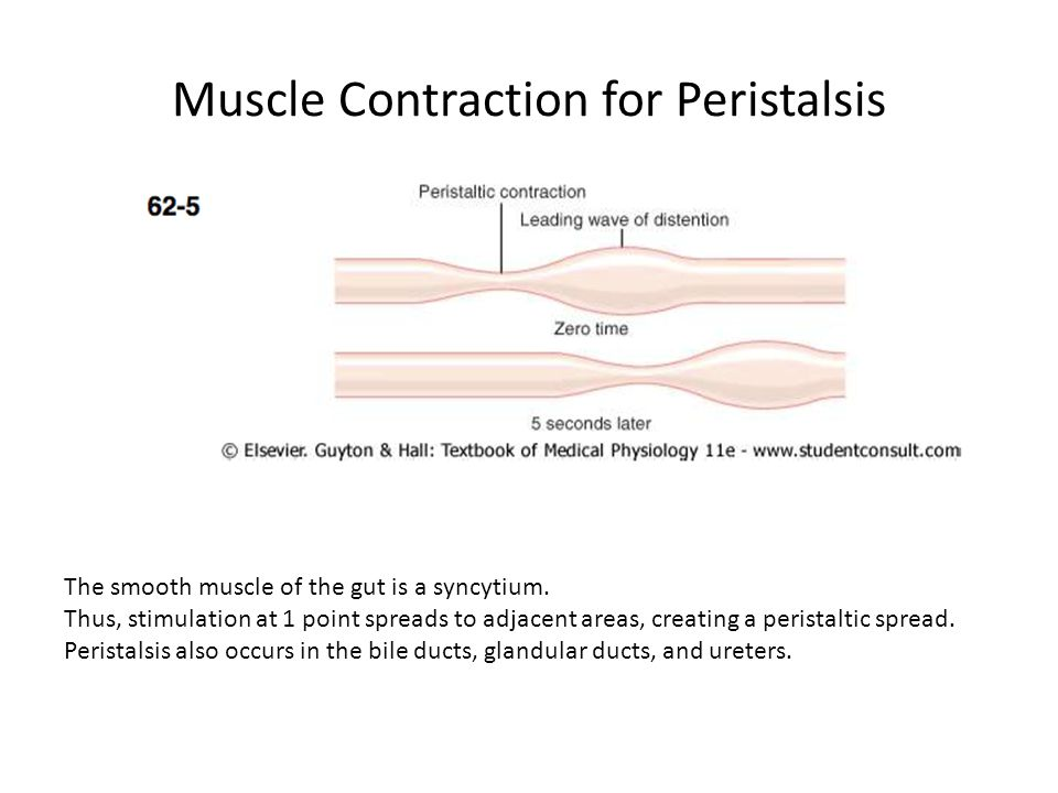 Muscle Contraction for Peristalsis