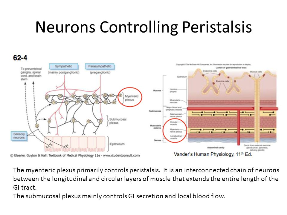 Neurons Controlling Peristalsis