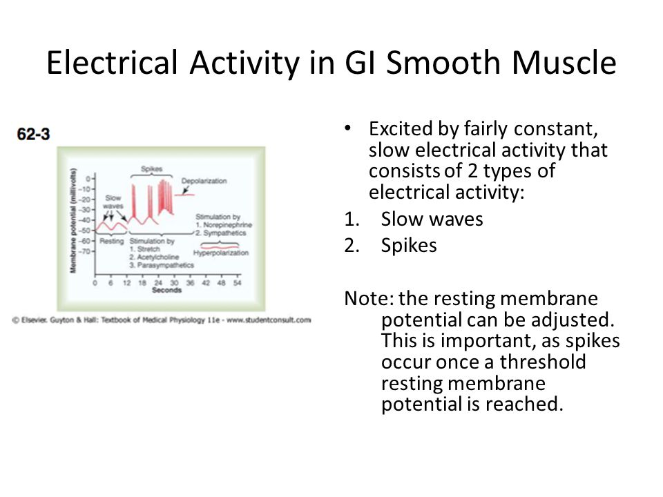 Electrical Activity in GI Smooth Muscle