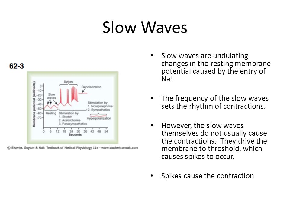 Slow Waves Slow waves are undulating changes in the resting membrane potential caused by the entry of Na+.