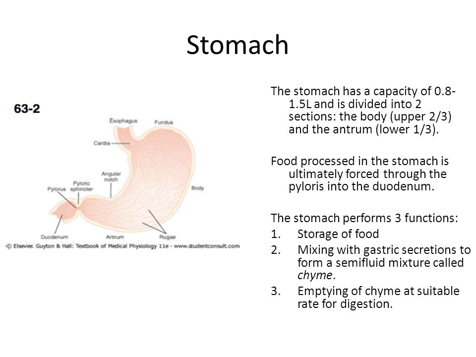 Stomach The stomach has a capacity of 0.8-1.5L and is divided into 2 sections: the body (upper 2/3) and the antrum (lower 1/3).