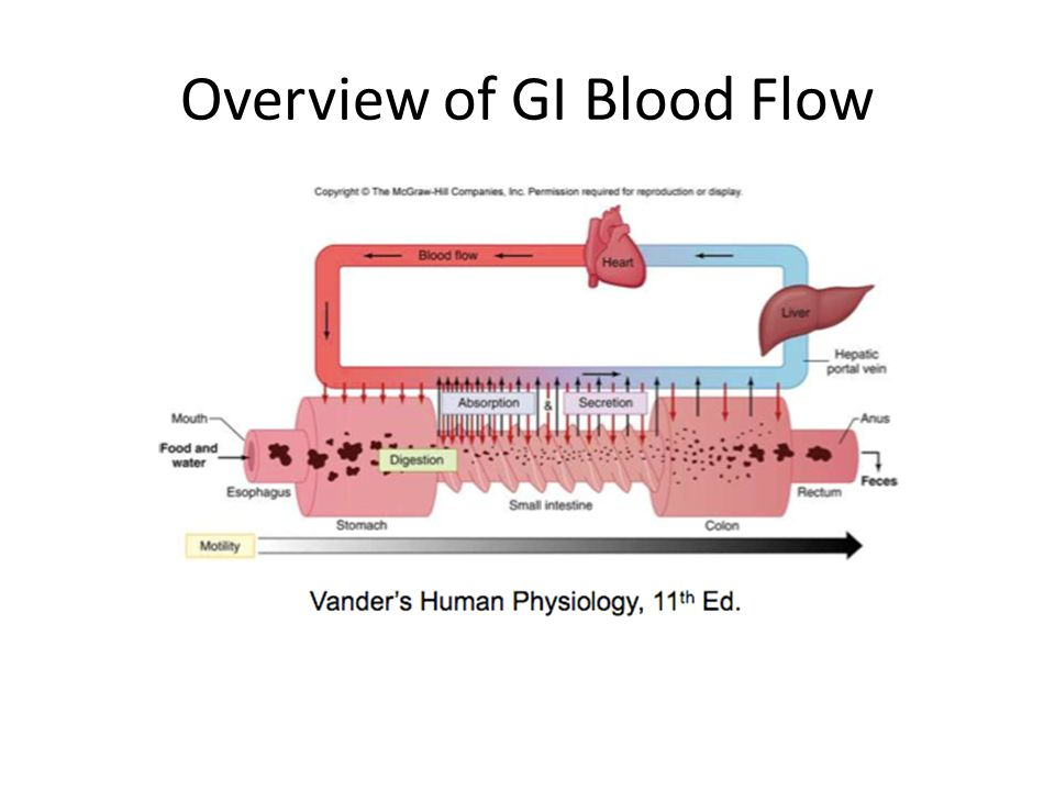 Overview of GI Blood Flow
