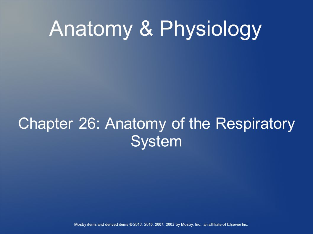 Chapter 26: Anatomy of the Respiratory System - ppt video online ...