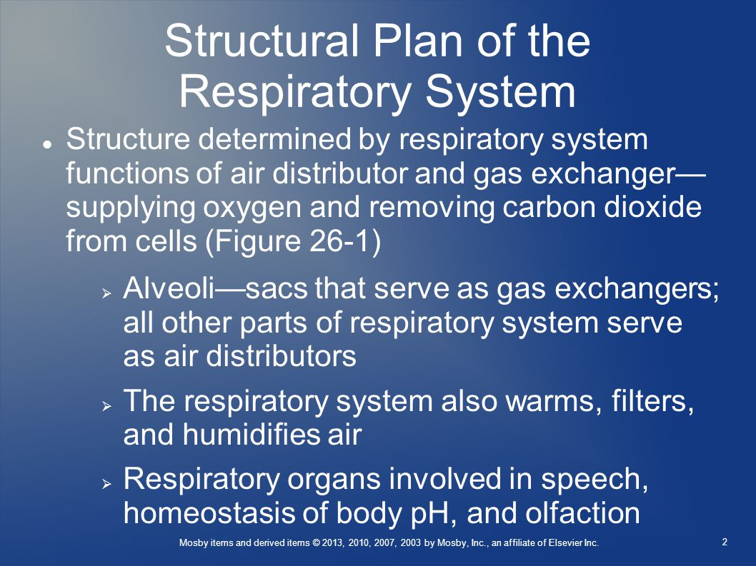 Structural Plan of the Respiratory System