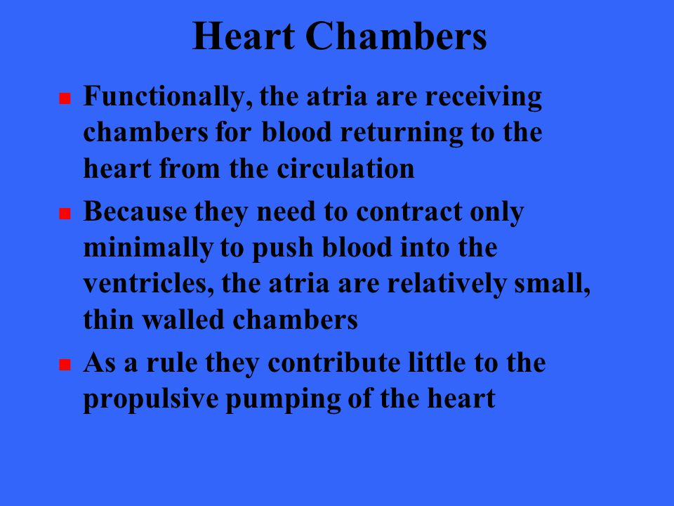 Heart Chambers Functionally, the atria are receiving chambers for blood returning to the heart from the circulation.