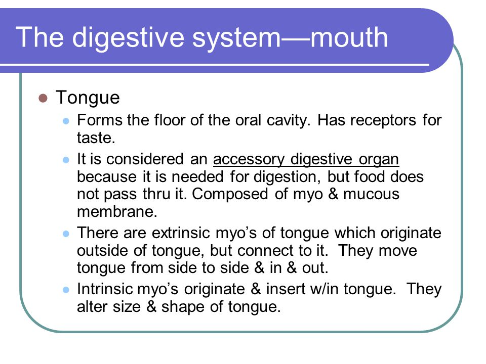 The digestive system—mouth
