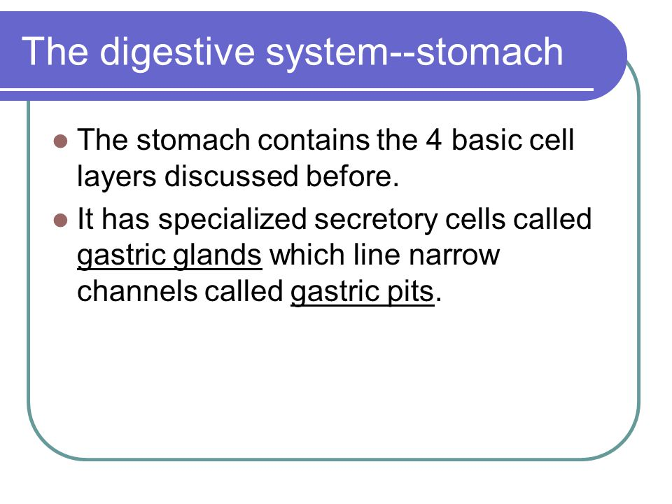 The digestive system--stomach