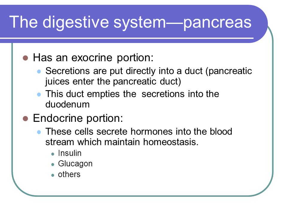 The digestive system—pancreas