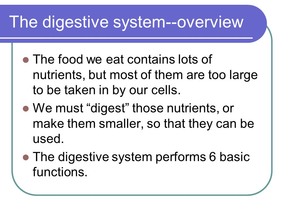 The digestive system--overview