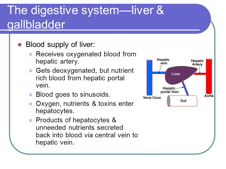 The digestive system—liver & gallbladder