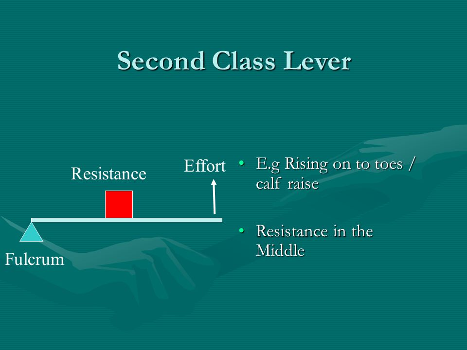 Second Class Lever Effort E.g Rising on to toes / calf raise