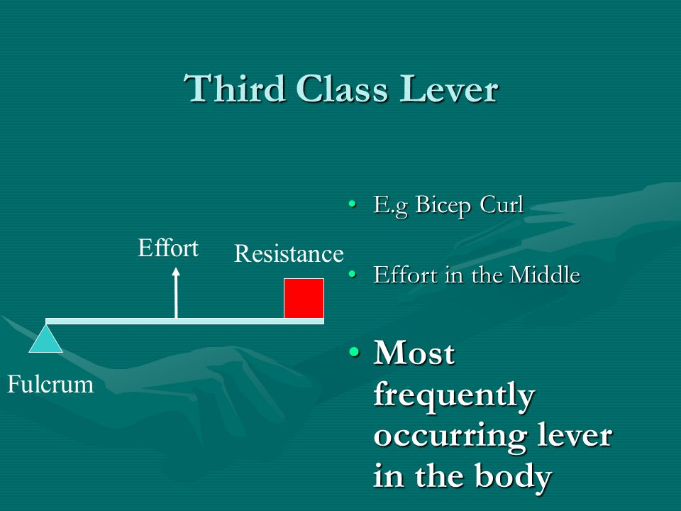 Third Class Lever Most frequently occurring lever in the body