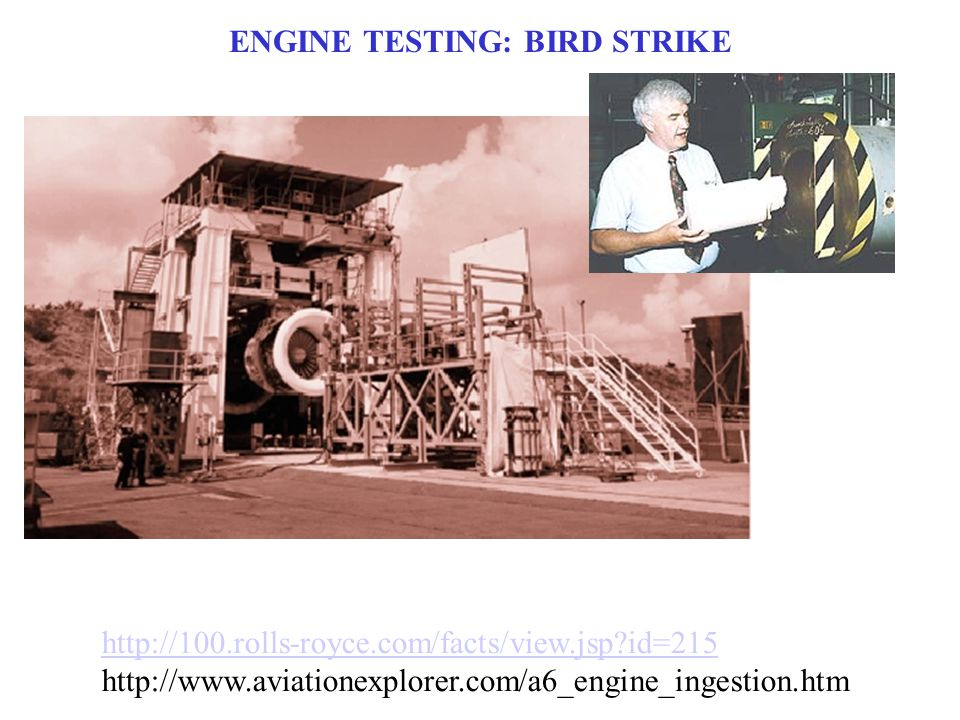 ENGINE TESTING: BIRD STRIKE