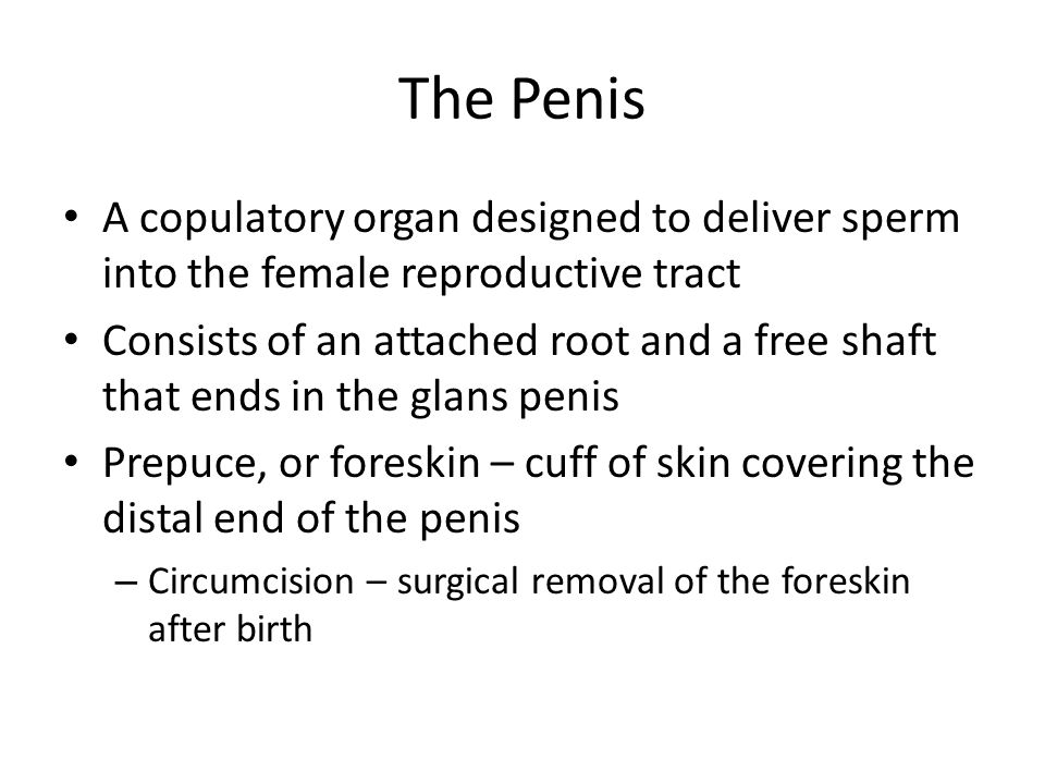 The Penis A copulatory organ designed to deliver sperm into the female reproductive tract.