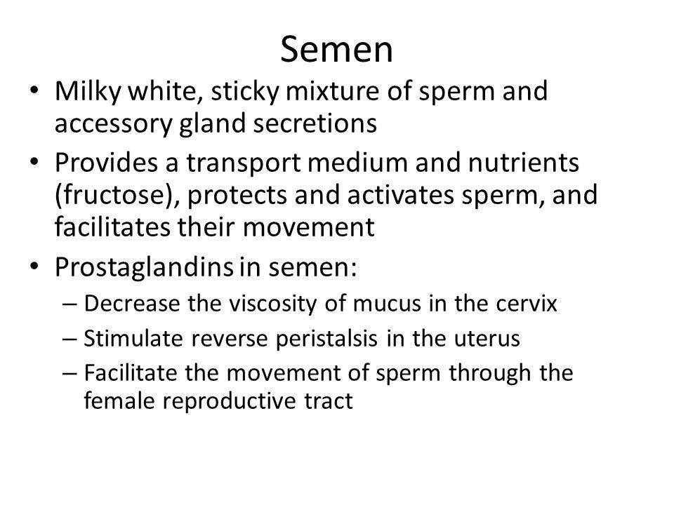 Semen Milky white, sticky mixture of sperm and accessory gland secretions.