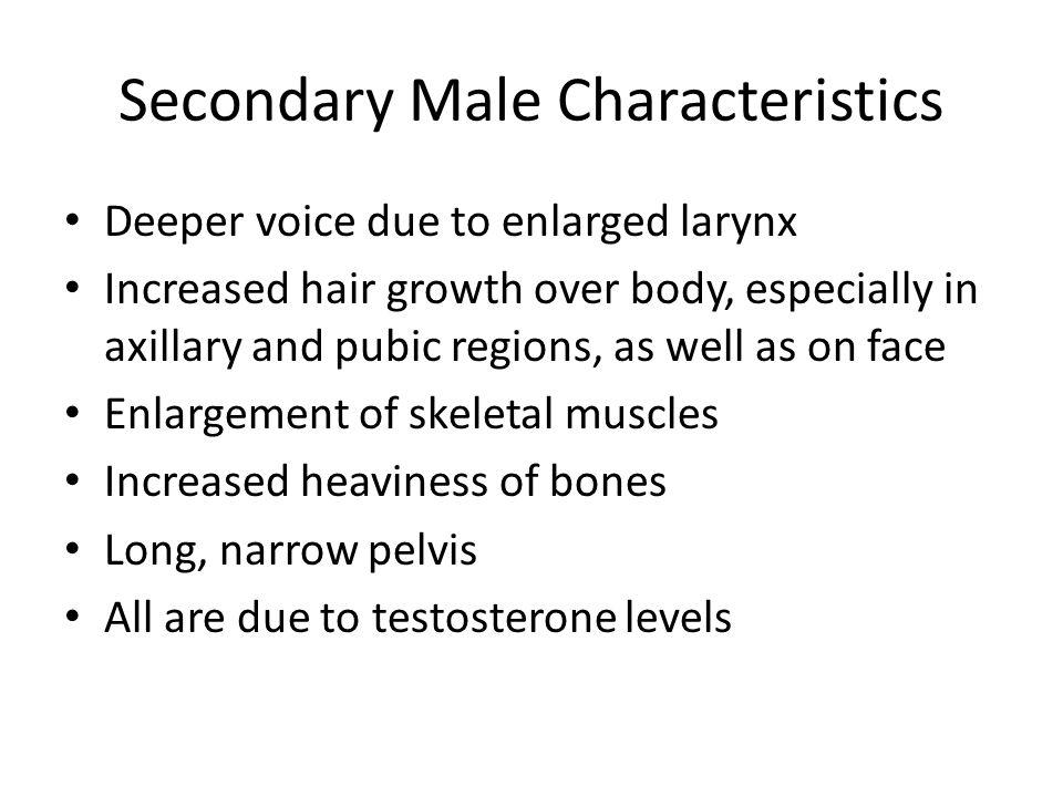 Secondary Male Characteristics