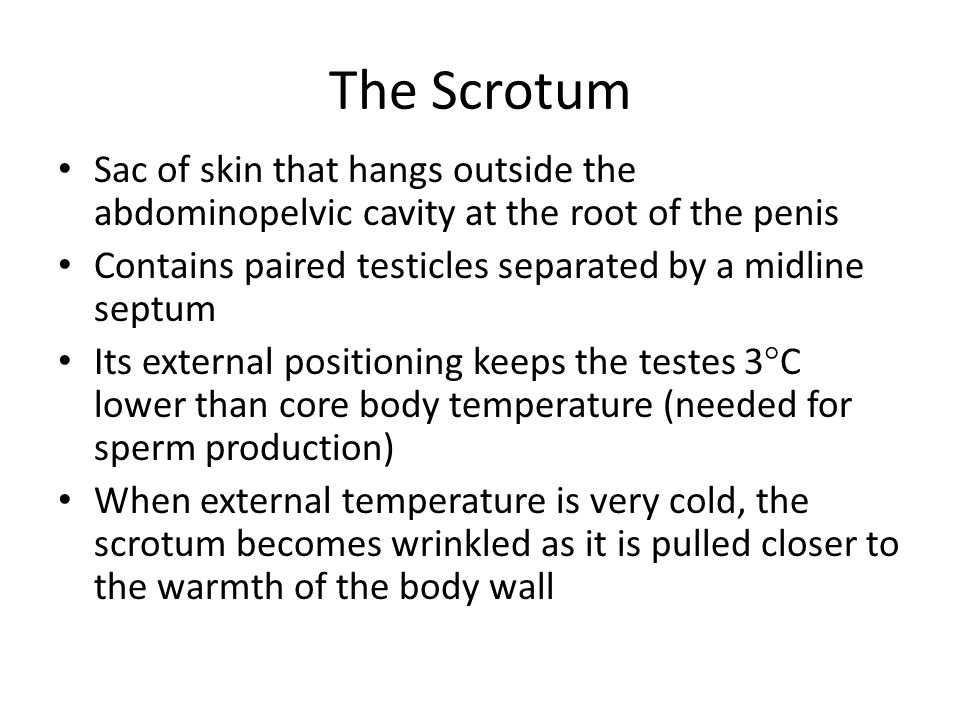 The Scrotum Sac of skin that hangs outside the abdominopelvic cavity at the root of the penis.