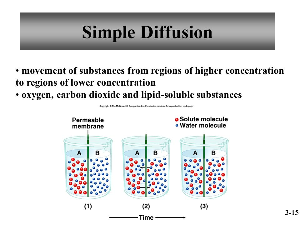 Simple Diffusion movement of substances from regions of higher concentration to regions of lower concentration.