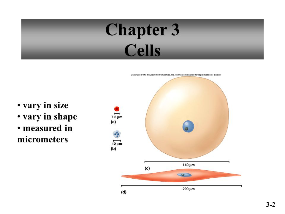 Chapter 3 Cells vary in size vary in shape measured in micrometers 3-2