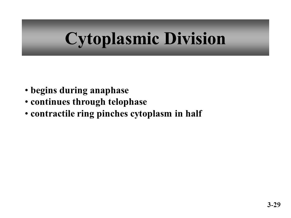 Cytoplasmic Division begins during anaphase