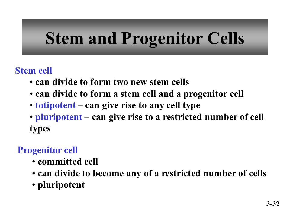 Stem and Progenitor Cells