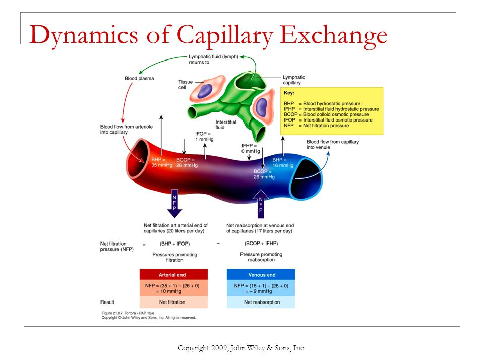 Dynamics of Capillary Exchange
