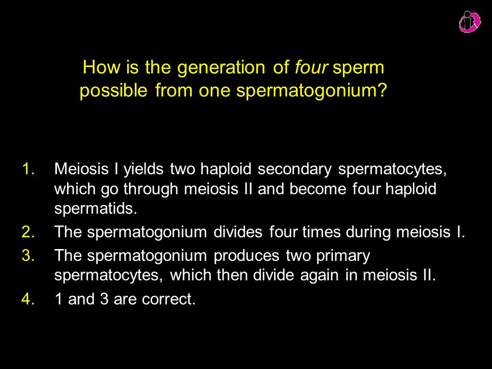 How is the generation of four sperm possible from one spermatogonium
