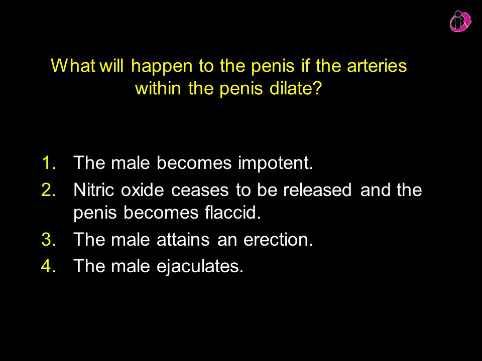What will happen to the penis if the arteries within the penis dilate