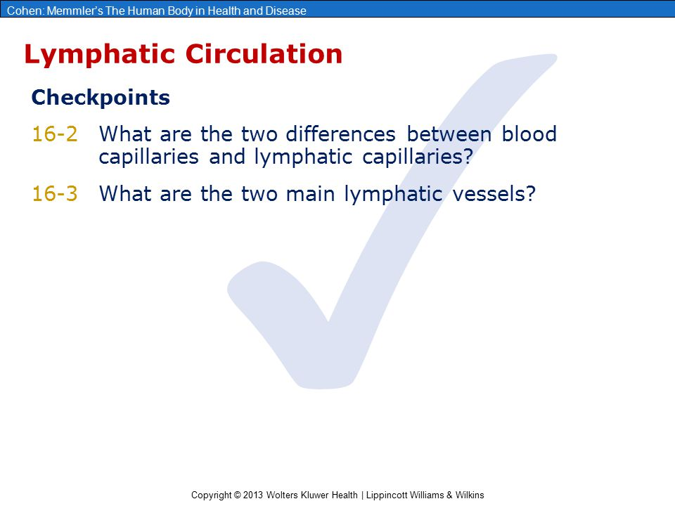 Lymphatic Circulation
