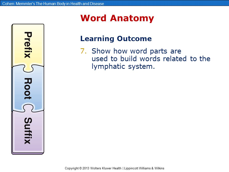Word Anatomy Learning Outcome