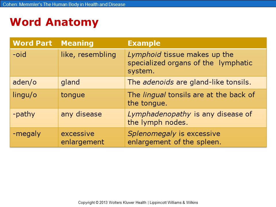 Word Anatomy Word Part Meaning Example -oid like, resembling