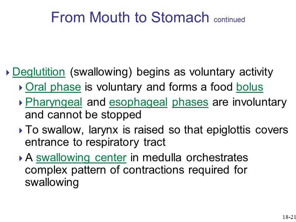 From Mouth to Stomach continued