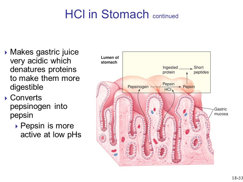 HCl in Stomach continued