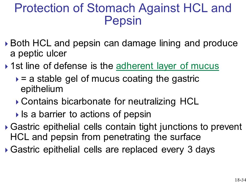 Protection of Stomach Against HCL and Pepsin